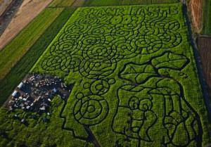 swank farms maze_0