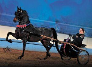 boyce-bender & horse